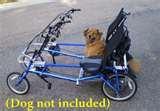 Exercise Bikes Dog photos