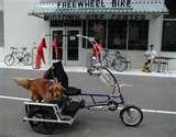 images of Exercise Bikes Dog